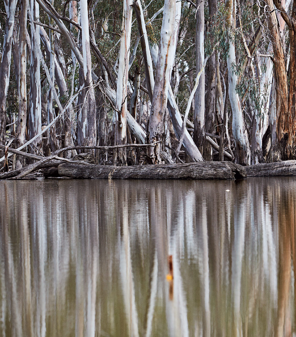 Eucalypt woodland, Murray River, Australia